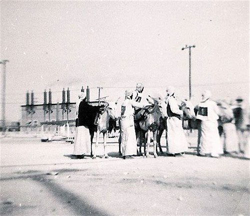 Arab Donkey Races