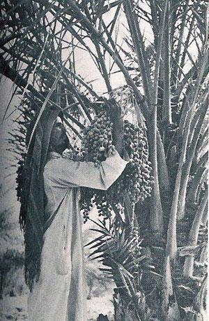 Saudi Worker